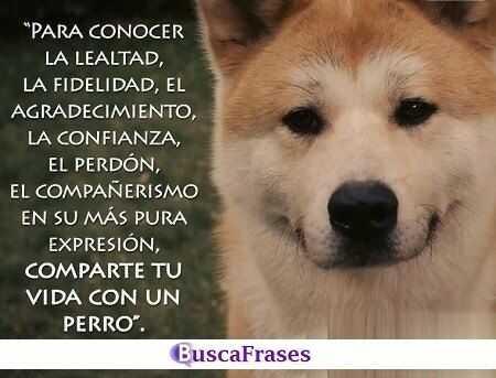 Frases para perros amigos fieles