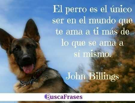 Frases Para Perros Buscafraseses