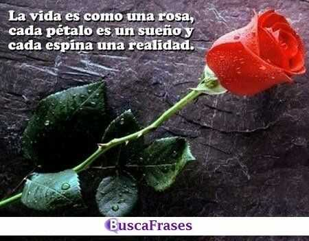 Frases Realistas Buscafraseses